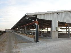 Tejelő szarvasmarha szárazonálló tehénistálló, üszőistálló.