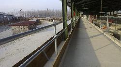 Szarvasmarha üszőistálló, növendékistálló, karámrendszerrel