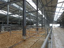 2 x 400 férőhelyes taposóalmos húsmarhaistálló, karámozással