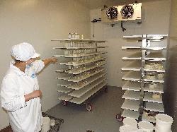 Sajtüzem-Tejfeldolgozó üzem, sajtgyártás