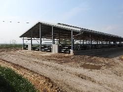 Tejelő szarvasmarha szárazonálló tehénistálló, üszőistálló, termelőistálló