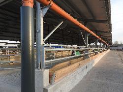 Tejelő szarvasmarha szárazonálló tehénistálló, üszőistálló etetőjászollal