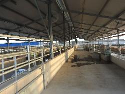 Tejelő szarvasmarha szárazonálló tehénistálló, üszőistálló 4 csoport