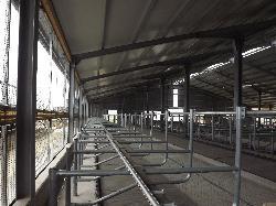 340 férőhelyes pihenőboxos tejelőmarhaistálló, gumimatraccal