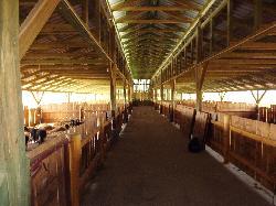 Mangalica farm-mangalicahízlalda, hajtófolyosó