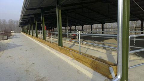 Szalapa - Szarvasmarha üszőistálló, növendékistálló