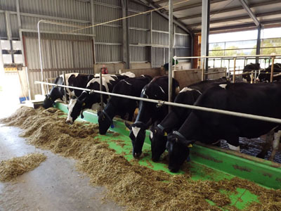 Sümeg-Jánosmajor 340 férőhelyes pihenőboxos tejelőmarhaistálló